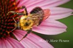 Bee 3 by Boody-Marie