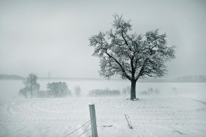 White Valley by SteOS