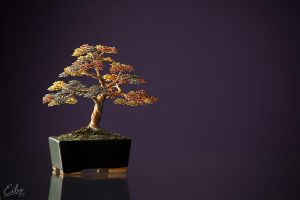 Bonsai 2 by Eibo-Jeddah