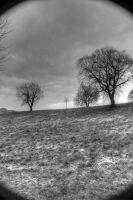 Wide-Angle Trees by RealUprightMan