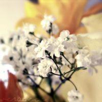 baby's breath. by veraleee