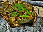 Frog by Mr-watson