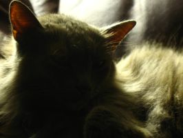 My Cat, Enlightened by beverly546