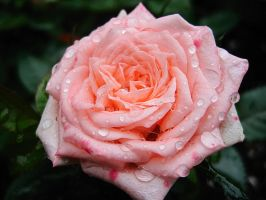 You're the True Pink by Dingwall