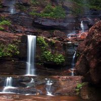Plants and Falls 2 by da-phil