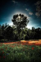 ...around poppies by ag90