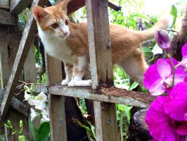 kitty loves orchids by plainordinary1