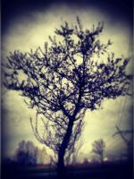 and another tree... by marjorie1206