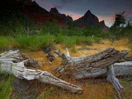 The Watchman by coulombic