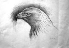 Eagle head study by munchengirl