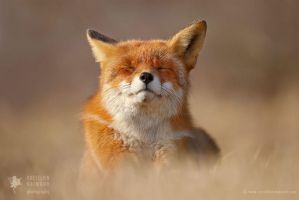 The Smiling Fox by thrumyeye
