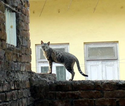 Cat on the Wall by rksomayaji