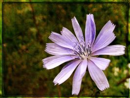 Flower8 by FxSanyi