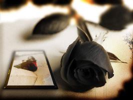 Black rose by armstrongstewart