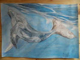 Humpback Whale by Morgendlich