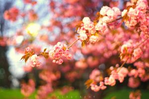 Springness by alahay