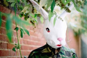 35mm Rabbit #1 by SuicideSeasonn