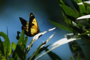 Butterfly by PeterTBexley