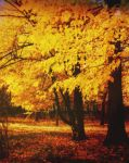 Autumn's Golden Light by AlexandrinaAna