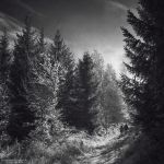 We'll walk this path together by DominikaAniola