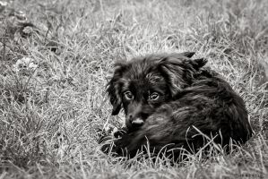 Chiot by VicDeS-P