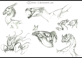 Dragon Heads_Sketches by ulven-f