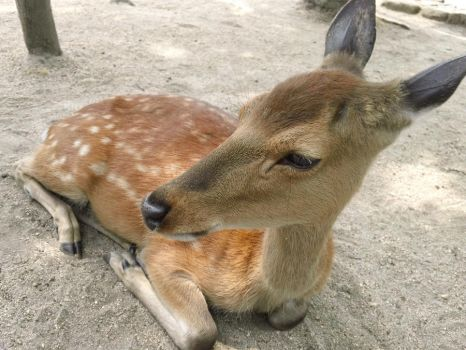 Adorable Deer by InternetScout