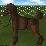 Mercury monthly effort show for poodles by fierfairy42