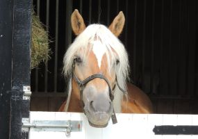 Mister Ed by CanveySue