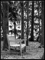 Bench in the Woods by MariusStormcrow