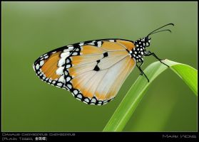 PU Butterflies 310508 V by log1t3ch