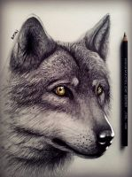Wolf drawing by Bajanoski