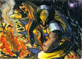 Wolverine Camping Sketch Card by DKuang