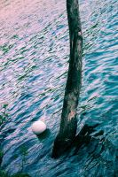The tree in the lake by LaCaSiNa