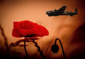 Lancaster Poppies by StephenJohnSmith