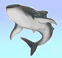 Shark Week Series [No. 1 Whale Shark] by Marxis