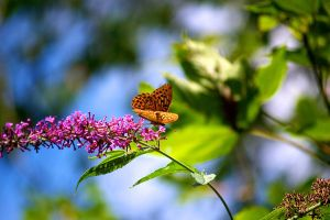 Butterfly 1 by cyric80