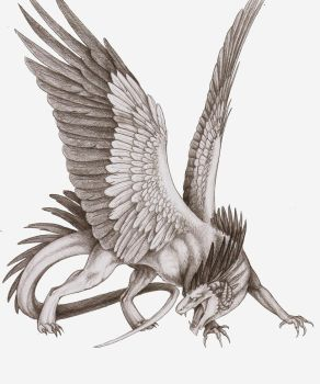 Feathered Dragon by Nachiii