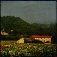 sunflower land by incolorwetrust