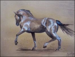 Andalusian stallion by HocusPlotus