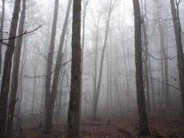 Fog in the Woods by mrcbax