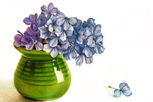 Hydrangea. Drawing in pencil by Rustamova