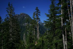 Mt Baker National Forest by iamkjelstrup
