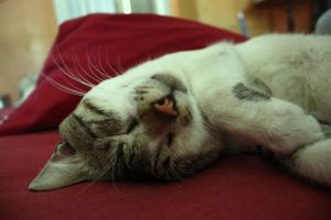 my cat was tired by peregrination