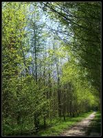 Other side of green path by Tindomiel-Heriroquen