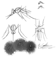 Mosquito Anatomy Sketches by GingaAkam
