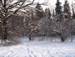Winter Scape 12 by KittyKati727-stock