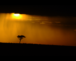 maasai mara sunset by performant