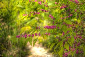 Beauty Berry by Raysperspective