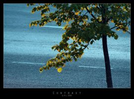 Contrast by Mr808